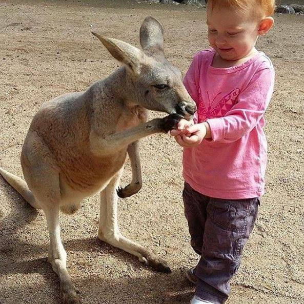 Currumbin Wildlife Sanctuary, the Perfect Day Out for Kids and Families