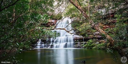 Witness This Hidden Australian Treasure at Springbrook National Park