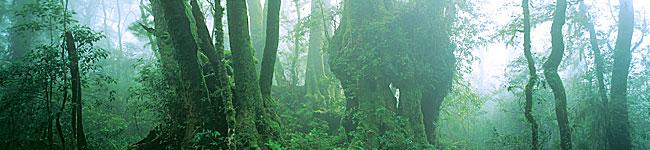 Get Adventurous at Lamington National Park